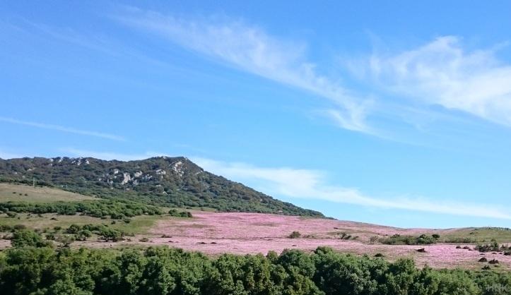 Tarifa in Andalucia