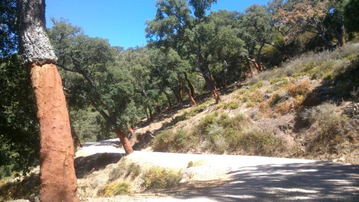 Los Alcornocales Naturaleza Salvaje