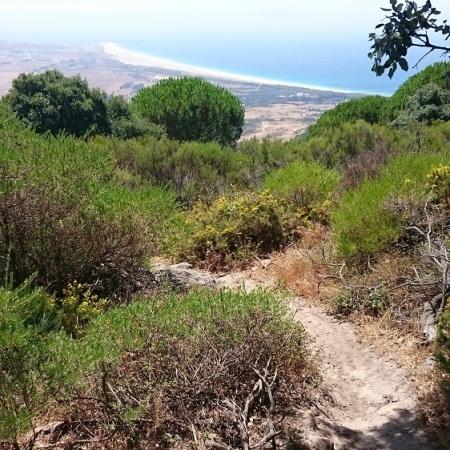 Downhill Sancho La Peña Zone